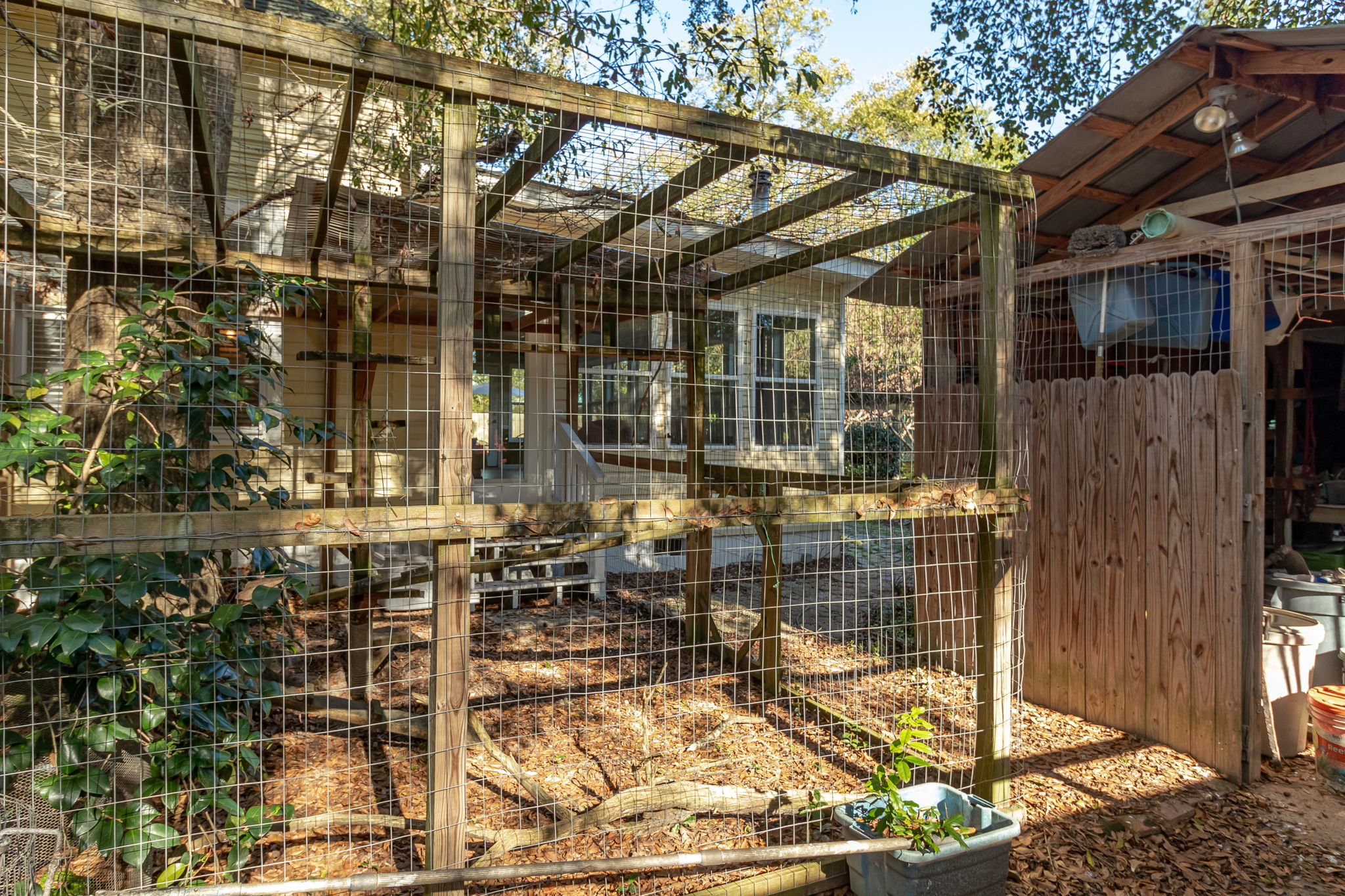 Cattery - Chicken Coop