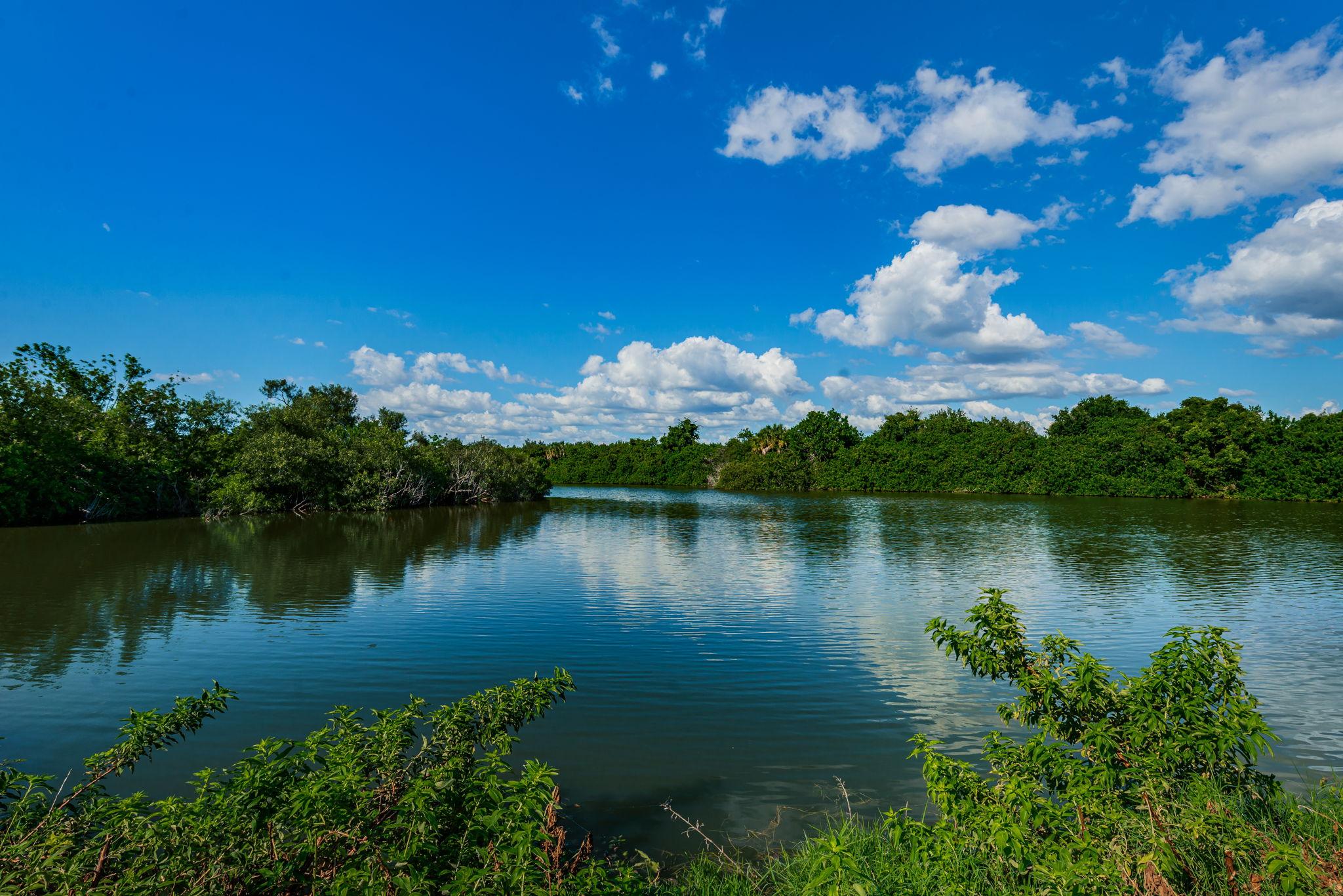 Backyard Water View