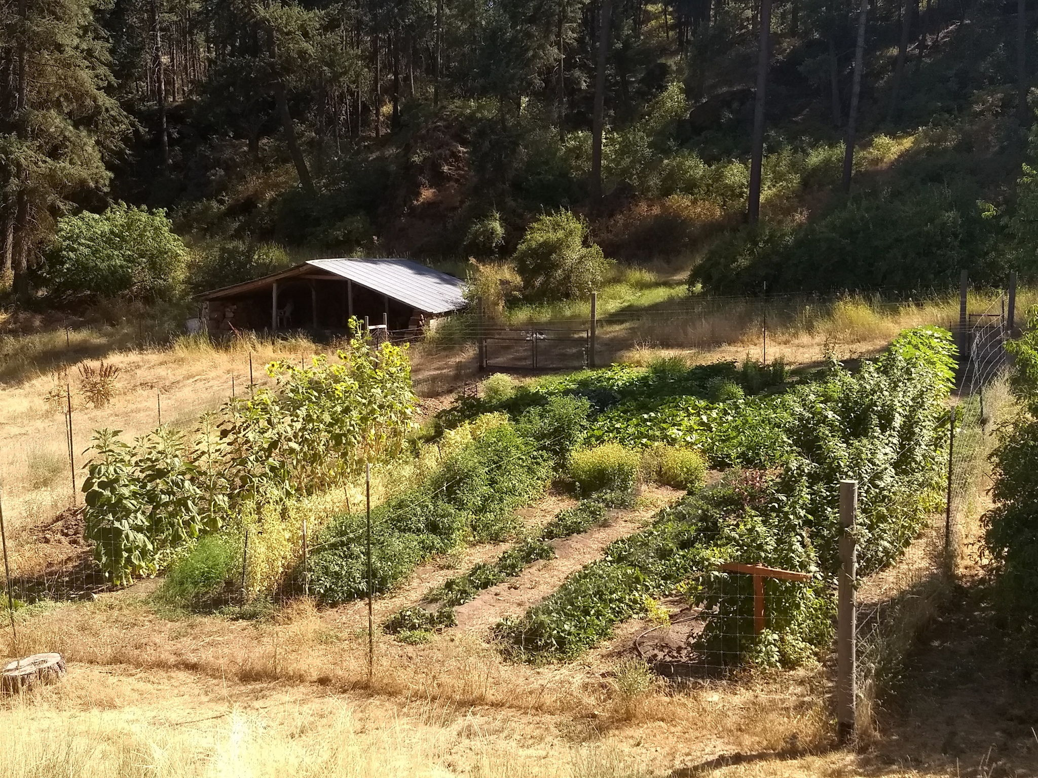 Fenced Garden Area Perfect For Homesteading