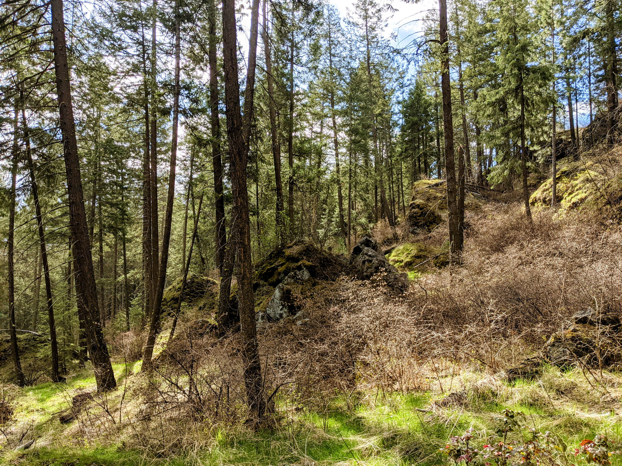 Native Plants, Moss, and Ferns
