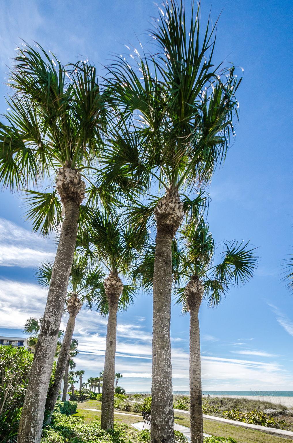 32-Sand  Key Club Beach Common Area