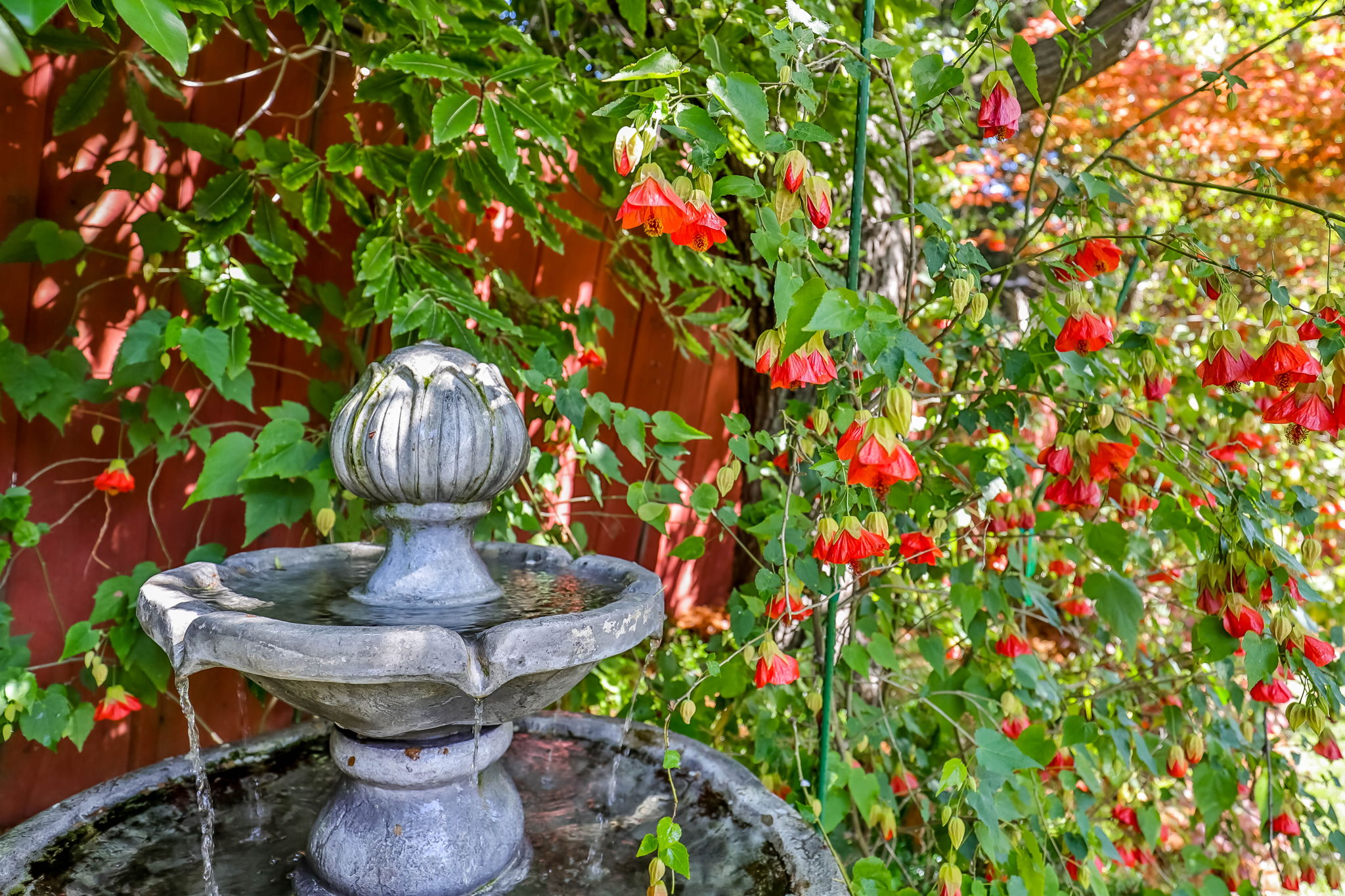 Tranquil Fountain with Mature Plantings
