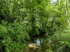 200 Gash Rd, Mills River, NC 28759, US Photo 73