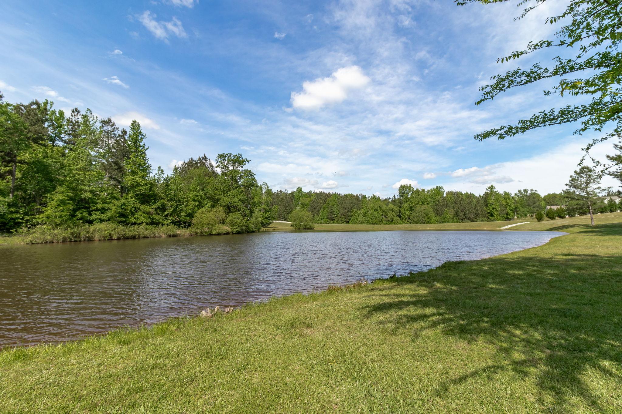Backyard - Pond