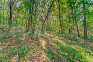 Backyard Trail