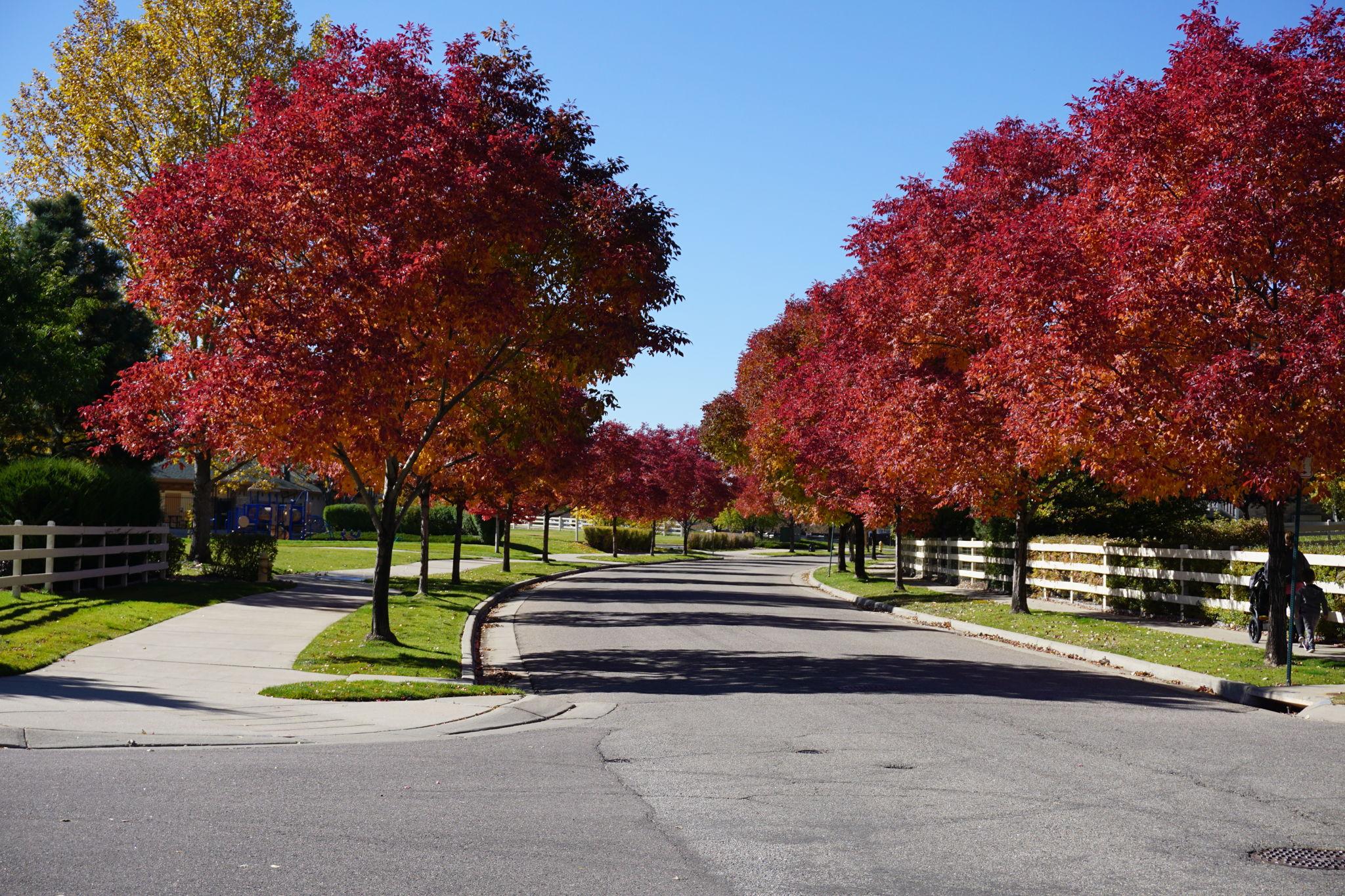 Treelined streets of the Broadlands